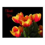 El tulipán de Rembrandt le agradece postal