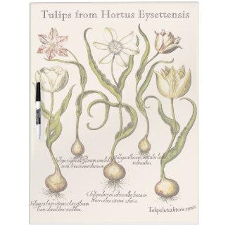 El tulipán florece al tablero seco del borrado pizarra blanca