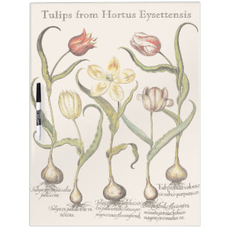 El tulipán florece al tablero seco del borrado pizarras blancas