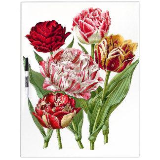 El tulipán florece floral seca al tablero del pizarras blancas de calidad