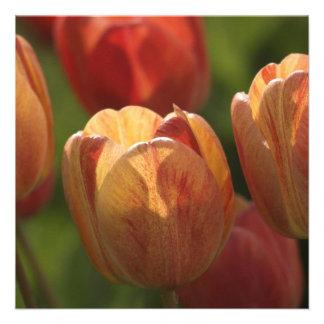 El tulipán florece las invitaciones anuncio