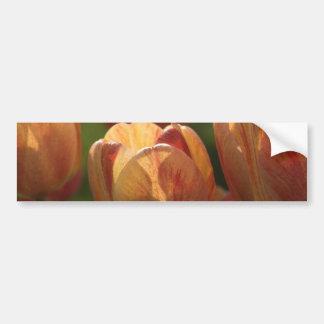 El tulipán florece las pegatinas para el parachoqu etiqueta de parachoque