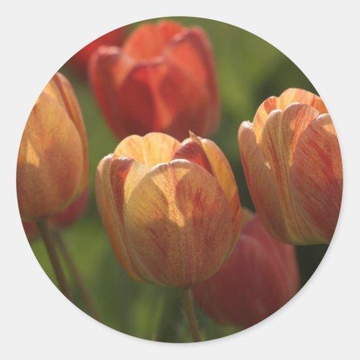 El tulipán florece los pegatinas etiqueta redonda