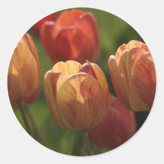 El tulipán florece los pegatinas pegatina redonda