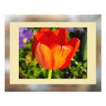 El tulipán impresiones fotograficas