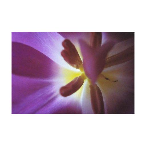 El tulipán púrpura estiró la impresión de la lona lona envuelta para galerías
