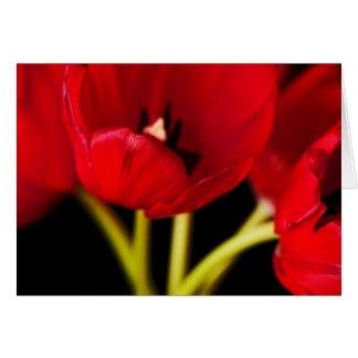 El tulipán rojo florece el fondo negro floral tarjeta pequeña