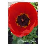 El tulipán rojo grande le agradece felicitacion