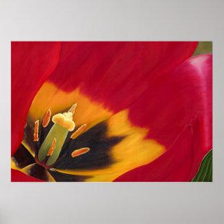 El tulipán rojo póster