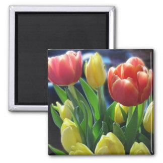 El tulipán rojo y amarillo romántico florece el imán cuadrado