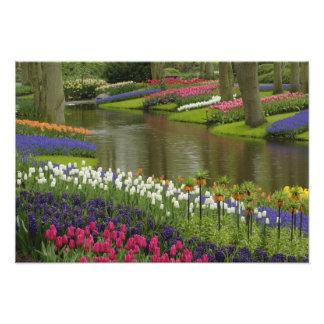 El tulipán y el jacinto cultivan un huerto, los ja fotografía