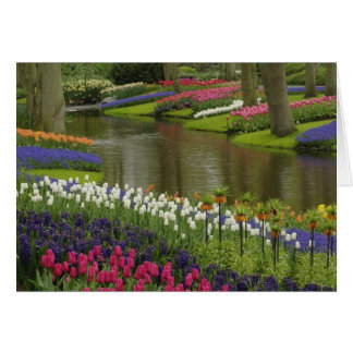 El tulipán y el jacinto cultivan un huerto, los ja tarjeta de felicitación