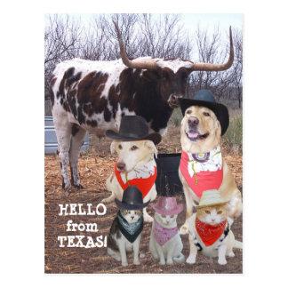 El vaquero divertido acaricia hola de Tejas Postal