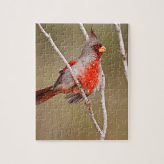 El varón del Pyrrhuloxia (sinuatus de Cardinalis)  Puzzle Con Fotos