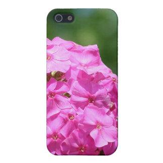 El verano hermoso florece el phlox púrpura rosado  iPhone 5 funda