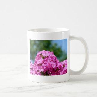 El verano hermoso florece el phlox púrpura rosado  tazas de café