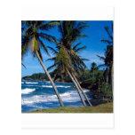 El verano tropical de la isla agita St Lucia Tarjetas Postales
