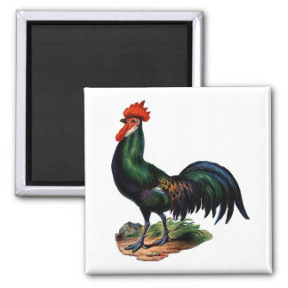 El verde antiguo empluma el gallo iman de nevera