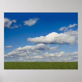 el verde archivó, cielo azul, nube blanca póster
