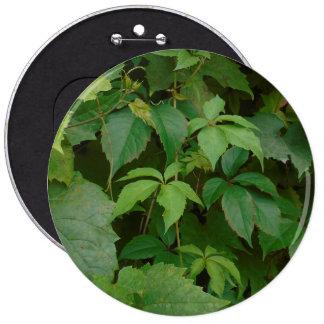 el verde deja al celtic lindo del otoño del boho pin redondo de 6 pulgadas