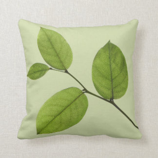 El verde deja la almohada de la naturaleza de la
