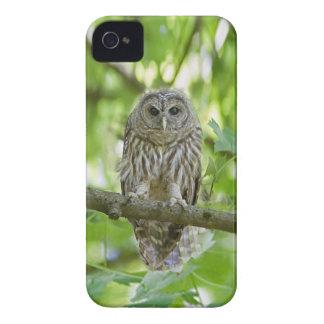 el verde   del árbol del pájaro del búho añade el  iPhone 4 carcasa