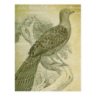 El verde del pájaro del vintage empluma el collage tarjetas postales
