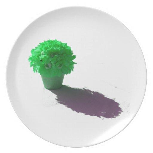 El verde florece el cubo y la sombra blancos platos