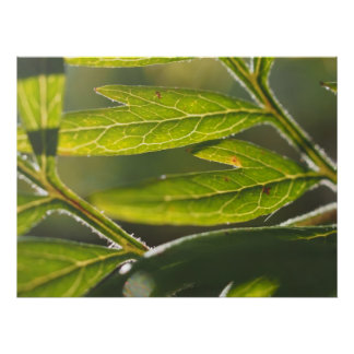 El verde hermoso deja la foto macra de la naturale posters