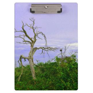 el verde púrpura del árbol muerto deja el cielo se