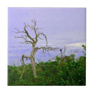 el verde púrpura del árbol muerto deja la escena d teja  ceramica