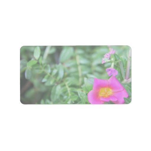 El verde rosado oscuro de la flor de Portulaca det Etiquetas De Dirección