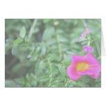 El verde rosado oscuro de la flor de Portulaca det Felicitaciones