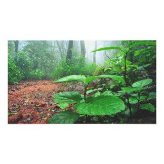 El verde se va en selva en un día lluvioso fotografías