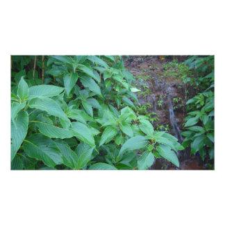 El verde se va en selva en un día lluvioso fotografía