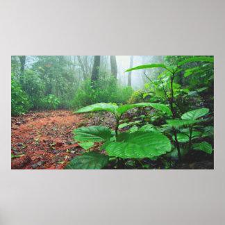 El verde se va en selva en un día lluvioso póster