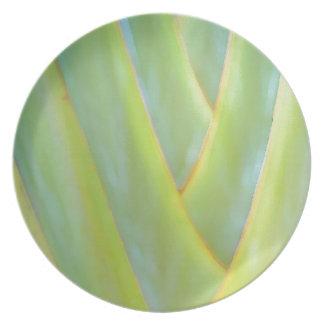 El verde tropical de las palmas deja a frondas platos