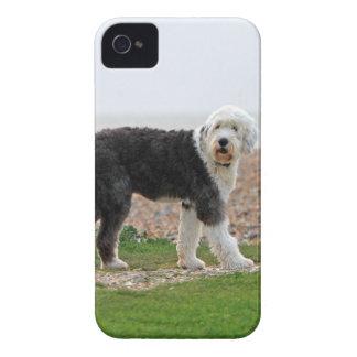 El viejo caso inglés del iphone 4 del perro del pe iPhone 4 carcasas