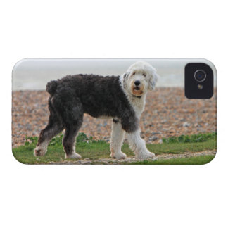 El viejo caso inglés del iphone 4 del perro del pe iPhone 4 Case-Mate carcasas