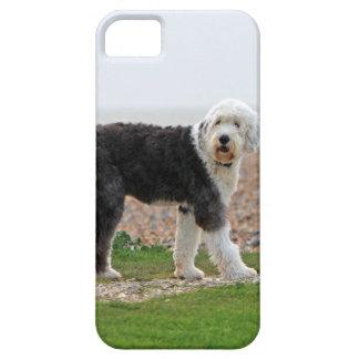 El viejo caso inglés del iphone 5 del perro del pe iPhone 5 Case-Mate carcasas
