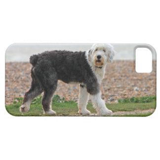 El viejo caso inglés del iphone 5 del perro del pe iPhone 5 Case-Mate coberturas