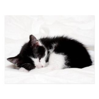El viejo dormir de ocho semanas del gatito (Felis Tarjeta Postal