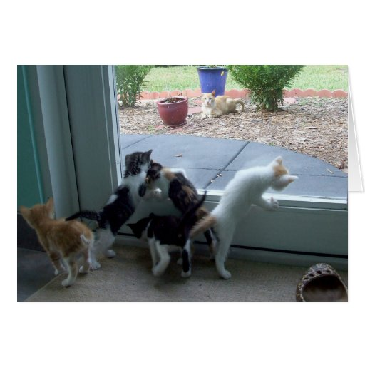 El viejo jugar de cinco semanas de los gatitos tarjeta