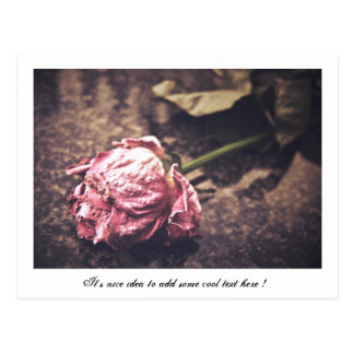 El viejo rosa teñido del vintage subió la foto postal