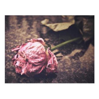 El viejo rosa teñido del vintage subió la foto tarjetas postales