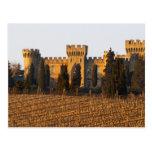 El viñedo con las vides del syrah y el castillo fr tarjeta postal