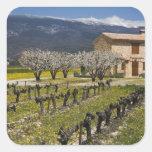 El viñedo inactivo, fruta florece, la casa de colcomania cuadrada