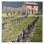 El viñedo inactivo, fruta florece, la casa de pied azulejo cuadrado grande