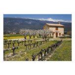 El viñedo inactivo, fruta florece, la casa de pied fotografías