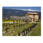 El viñedo inactivo, fruta florece, la casa de pied postal